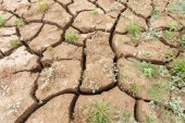 Surface crack of soil — Stock Photo