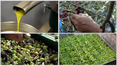 Olives in mill collage — Wideo stockowe
