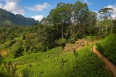 Tea plantation landscape in Sri Lanka — Stock Photo