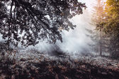 Foggy morning — Stock Photo