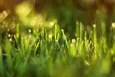 Sunlight shines through  blades of grass. — Fotografia Stock