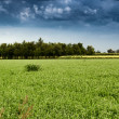 Cultivated fields — Stock Photo #52156723