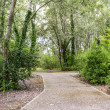 Walk path through green trees — Stock Photo #52159291