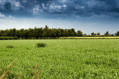 Cultivated fields  — Stock Photo