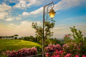 Lamp on green view — Stock Photo