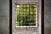 Window of Prague — Stock Photo