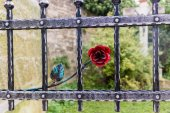 Iron gate with red rose and crucifix — Stock Photo