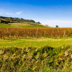 Autumnal Vineyards on badlands — Stock Photo #63631817