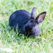 Black bunny in the grass — Stock Photo #65332705