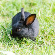 Black bunny in the grass — Stock Photo #65333665