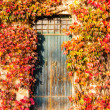 Japanese creeper and old door — Stock Photo #65364505