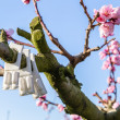 Blossoming peach trees treated with fungicides — Stock Photo #70530705