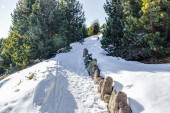 Footpath in snow among pines on Dolomites mountains — Stock Photo