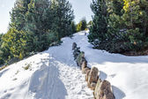 Footpath in snow among pines on Dolomites mountains — Foto de Stock