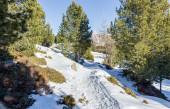 Patika pines Dolomites dağlar üzerinde arasında karda — Stok fotoğraf
