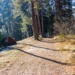Footpath in pine forest on Dolomites mountains — Stock Photo #70635013