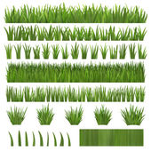 Several types of grass — Stock Photo