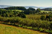 Orchards and Farmlands in Williamstown, MA — Stock Photo