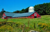 Saxton's River, VT: Red Dairy Barn — Stock Photo