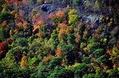 Cold Spring, NY: Colourful Autumn Foliage — Stock Photo