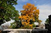 NYC: Colourful Autumnal Tree at the Cloisters Museum — Stock Photo