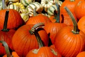 NYC: Pumpkins at Union Square Farmer's Market — Stock Photo