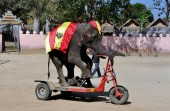 Hua Hin,Thailand: Performing Elephant in Show — Stock Photo