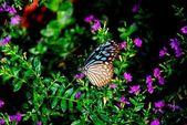 Batu Ferringhi, Malaysia: Butterflies — Stock Photo