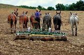 Lancaster County, PA: Amish Man Plowing Field — Stock Photo