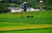 Strasburg, PA: Amish Buggy and Farmlands — Stock Photo