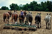 Ronks, Pennsylvania: Amish Youth Plowing Field — Stock Photo