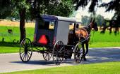 Lancaster County, PA: Amish Buggy — Stock Photo