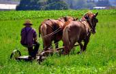 Lancaster County, PA: Amish Farmer Plowing Field — Stock Photo