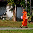 Chiang Mai, Thailand: Young Monk at Wat Suan Dok — Stock Photo #77219339