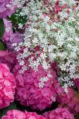 Маленькие белые цветки — Стоковое фото