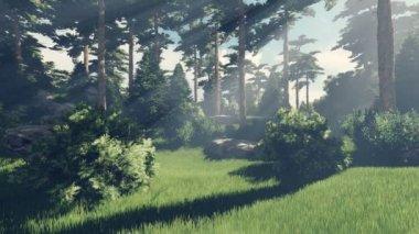Słoneczny dzień w magicznym lasem — Wideo stockowe