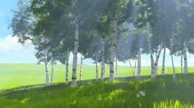 Birch grove edge in spring — Stock Video