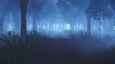 Beweging door de mistige nacht bos — Stockvideo