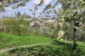 Vista a mola castelo gótico de praga com a natureza verde e árvores floridas, república checa — Fotografia Stock
