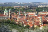View on the spring Prague with St. Nicholas' Cathedral, green Nature and flowering Trees, Czech Republic — ストック写真