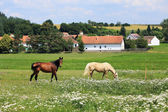 Horse on the green Pasture — ストック写真