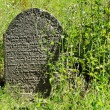 Tombstone on the old village Jewish Cemetery, Czech Republic — Stock Photo #72578365