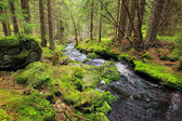 Creek in beautiful Wilderness from Mountains Sumava, southern Czech — Stock Photo