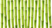 Bamboo — Stockfoto