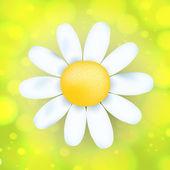 Chamomile flower head — Stock Vector