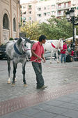Horses near the square for bullfighting in Granada — Stock Photo