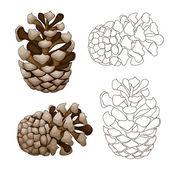 Pine cone illustration — Stock Vector