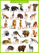 Chart of A to Z wild animals — Stock Vector