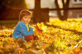 Adorable little boy with autumn leaves in the beauty park — Stock Photo