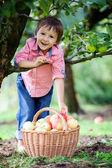 Adorable boy with a basket of apples — Foto de Stock